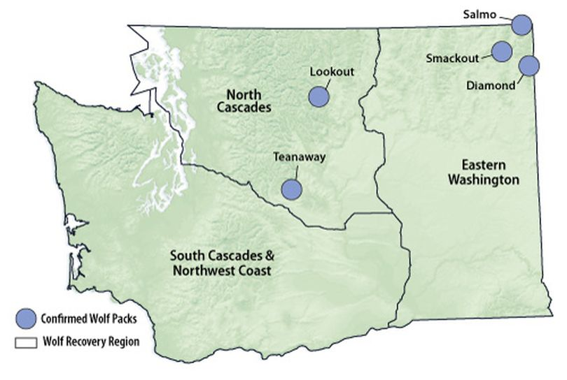Documented wolf packs in Washington at the end of 2011. (Washington Fish and Wildlife Department)