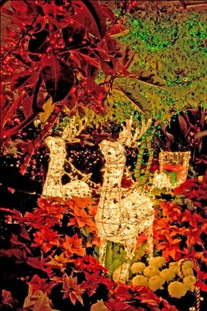 Ligths at Gaiser Conservatory in Manito Park (Spokane Parks and Recreation Department)