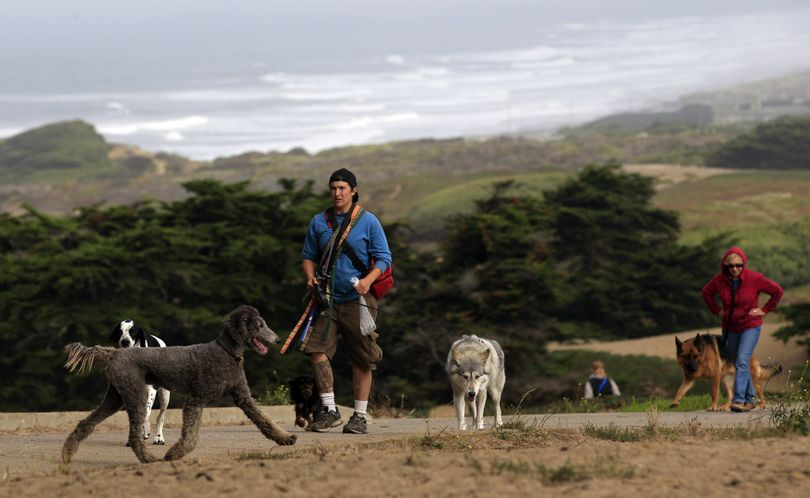 Dogs walk off leash along with their human companions at Fort Funston in San Francisco, Thursday, Sept. 29, 2011.  There are more dogs in this City by the Bay than there are kids. So it stands to reason dog owners carry a lot of clout _ so much so they think their endorsement can sway the upcoming mayoral race. They have formed a Political Action Committee to promote the interests of their four-footed friends, namely space to run free, even the country's largest urban national park. (Marcio Sanchez / Associated Press)