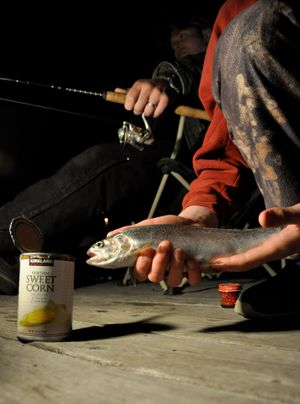 An angler lands a rainbow trout trout by lantern light shortly after midnights on April 27, 2013, off the Fishtrap Lake Resort dock. (Rich Landers)