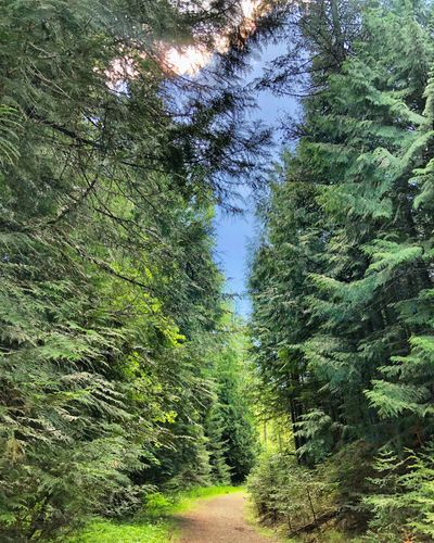 McKenzie Conservation Area offers a beautiful view of the region.  (Seagrin von Ranson/For Evercannabis)