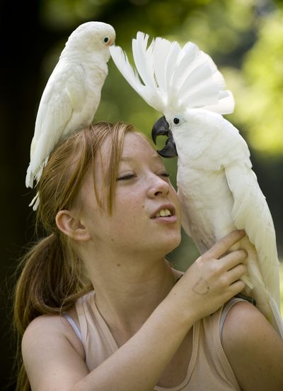 Rachel Mewes, 16, plays with her cockatoos Saturday at an annual bird lovers' potluck  at Franklin Park. Pampered Parrots Avian Rescue sponsored the event. (Colin Mulvany / The Spokesman-Review)