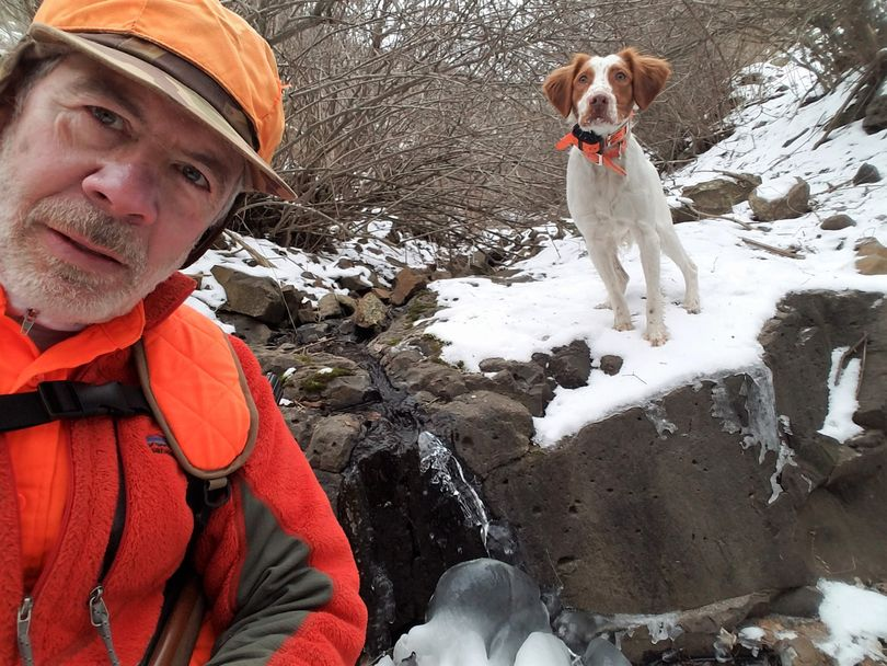 Rich Landers and his Brittany pup, Ranger, pause by a mostly frozen creek as they hunt chukars in January in the Snake River canyon. (Rich Landers)