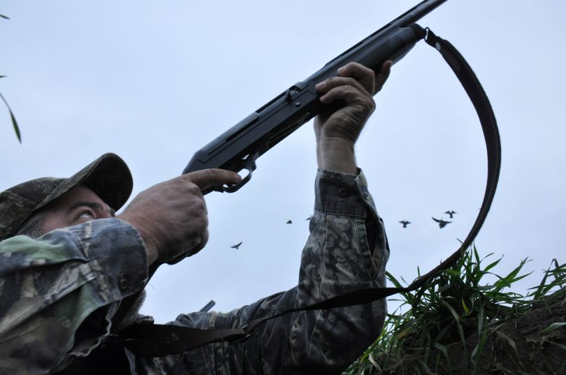 Waterfowl hunters emerge from a pit blind to fire at geese landing in their spread of decoys. (Rich Landers)