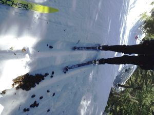 Fresh moose droppings litter the groomed cross-country ski tracks near Shadow Mountain on Mount Spokane State Park.  (Jim Harless)