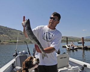 Don Burks, of Yakima, displays part of his catch, taken over a couple of days at the Brewster Pool. He and many other anglers have been doing better than usual because of the record run of sockeye salmon.  (Jesse Tinsley)