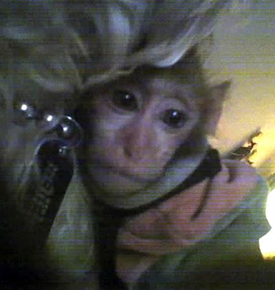 Gypsy Lawson has been indicted for smuggling a pet monkey into the United States from Asia, but she claims that she returned to the United States from her Asia trip and bought the monkey, a rhesus macaque, in California.  Apoo the monkey used to sleep with Lawson's dog Albert.  Courtesy of Gypsy Lawson (Jesse Tinsley / The Spokesman-Review)
