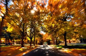Manito Boulevard on Spokane's South Hill offers an amazing look at some of the season's best foliage. Beyond Spokane, there are several great spots to see the best fall has to offer.  (Christopher Anderson photos/ / The Spokesman-Review)