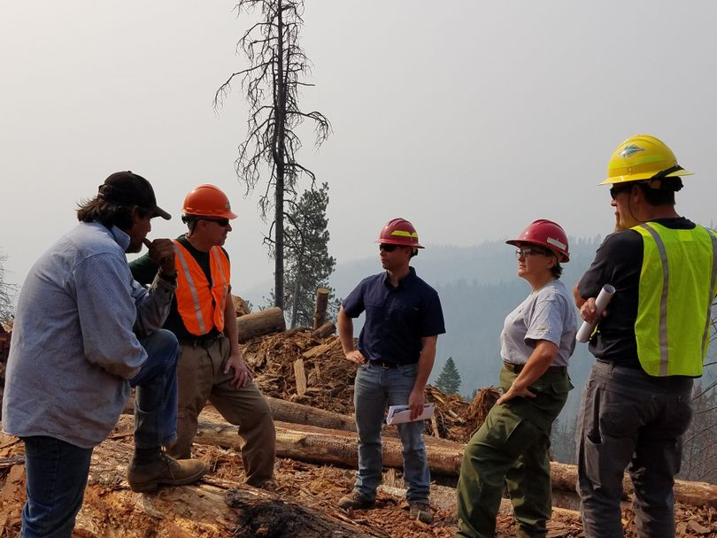 """Federal and state forestry officials and a contractor confer at the site of the Woodrat salvage timber sale, a """"Good Neighbor Authority"""" project in the Nez Perce National Forest. From left are Arnold Pineda, of Pineda Brothers Logging; Idaho State Forester David Groeschl; state Lands Department worker Jarel Bruce; Nez Perce-Clearwater National Forest Supervisor Cheryl Probert; and Idaho Department of Lands Forestry and Fire Division Administrator Craig Foss. (Idaho Department of Lands)"""
