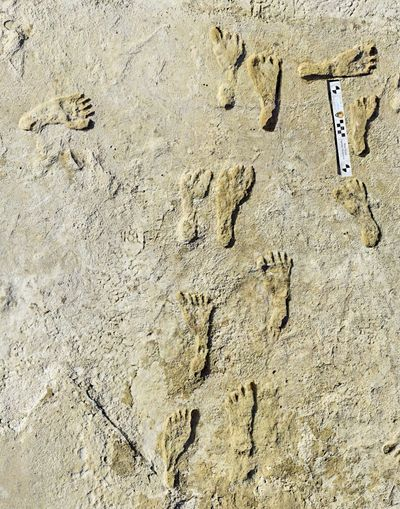This undated photo made available by the National Park Service in September 2021 shows fossilized human fossilized footprints at the White Sands National Park in New Mexico. According to a report published in the journal Science on Thursday, Sept. 23, 2021, the impressions indicate that early humans were walking across North America around 23,000 years ago, much earlier than scientists previously thought.  (HOGP)