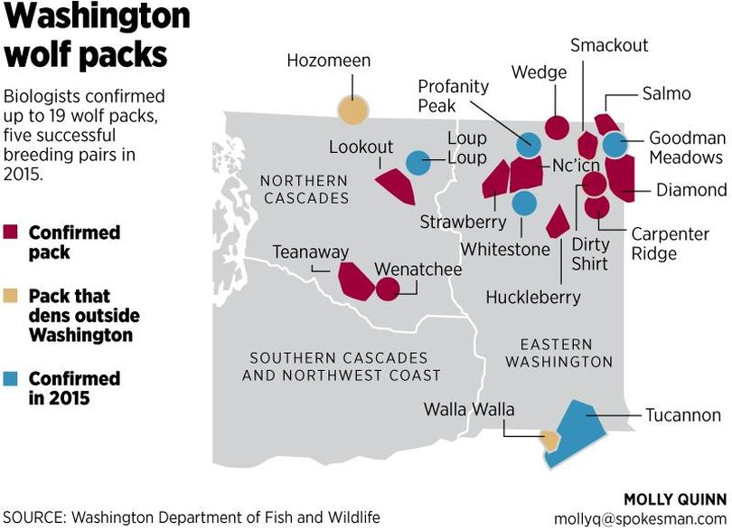 Graphic shows unofficial listing of wolf packs in Washington as revealed in 2014 and 2015. The official listing of wolf packs, territories and breeding pairs through the end of 2015 is being compiled by state Fish and Wildlife biologists and and will be released at the Washington Fish and Wildlife Commission meeting on March 18-19, 2016, in Moses Lake.  Changes are expected, officials said.