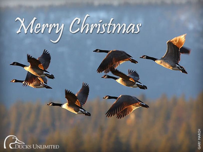 Canada geese featured in a holiday card from Ducks Unlimited. (Ducks Unlimited)