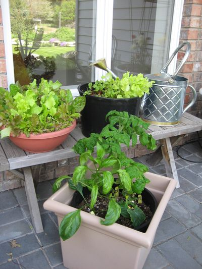Growing vegetables in containers is a great solution for gardeners who are short on space. Special to  (SUSAN MULVIHILL Special to / The Spokesman-Review)