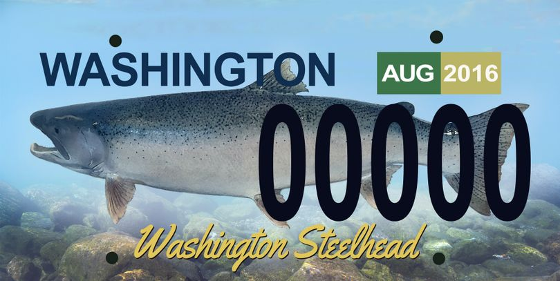 A proposed steelhead license plate could become available to Washington motorists to raise funds for wild fish programs. (Washington Department of Fish and Wildlife)