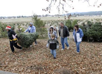 Hutton Settlement Christmas Trees 2020 Hutton mission | The Spokesman Review