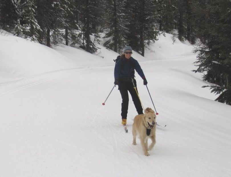 Shelley Richards and Luna enjoy skijoring at Mount Spokane nordic trails, were dogs are allowed on a certain trail Sunday and Wednesday afternoons after 2 p.m. (Diana Roberts)