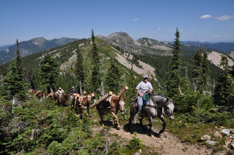 A U.S. Forest Service pack string heads up the trail to Star Peak in the Kootenai National Forest loaded with materials to restore a fire lookout. In the lead is packer Cindy Betlach based in Troy, Mont., followed by mules from the Northern region mule string based at the Historic Ninemile Ranger Station northwest of Missoula. In the background is Billiard Table Peak and some of the area northeast of Lake Pend Oreille and along the Idaho-Montana border proposed as the Scotchman Peaks Wilderness. (Rich Landers)