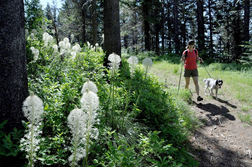 Meredith Heick enjoys the blooming beargrass during a June hike with her dog, Scout, on Mount Spokane State Park trails, where dogs are required to be on leash. (Rich Landers)