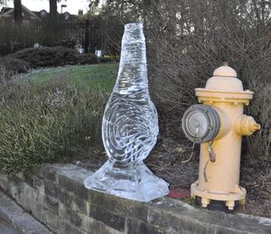 OLYMPIA -- Ice sculpture of a geoduck that was used to decorate a table serving oysters at the Inaugural Ball reception Wednesday rests on a stone wall next to a Capitol fire hydrant at the entrance to the Governor's Mansion Thursday, 1/12/2017, as cleanup from the celebrations continue. Because the weather is hovering around freezing during the day, and expected to drop below it at night, the sculpture may be around for a while.   (Jim Camden/The Spokesman-Review)