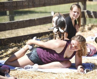 Madison Lovett practices yoga June 25 as a goat climbs on her shoulders  at Flying Pig Farms north of Kalispell, Mont. (Brenda Ahearn / Brenda Ahearn/Daily Inter Lake)