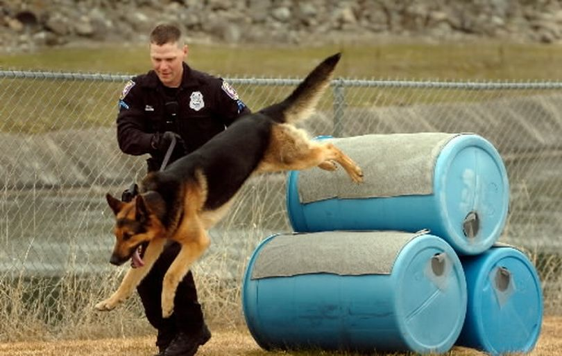 Officer Jake Jensen runs his K-9 partner Duke over an obstacle Wednesday at the Spokane Regional Training Center. Jensen and Duke, as well as Yakima police Officer Jared Nesary and his K-9 partner Bruno, graduated Wednesday from the Spokane Police Patrol Dog School. Duke came from the SPD's Puppy Program, where older police dogs are bred and the puppies trained by the department, saving money over buying a fully-trained dog.  (Jesse Tinsley / The Spokesman-Review)