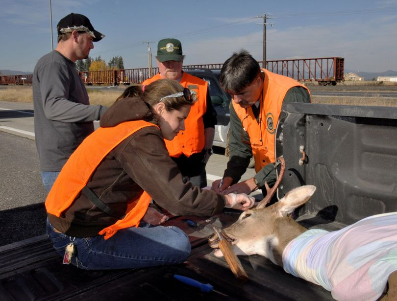 Washington wildlife biologists Ann Marie Prince, left, and Dana Base take measurements of a buck at the Deer Park check station. (Rich Landers / The Spokesman-Review)