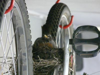 Apparently, patio living is for the birds. (The Spokesman-Review)