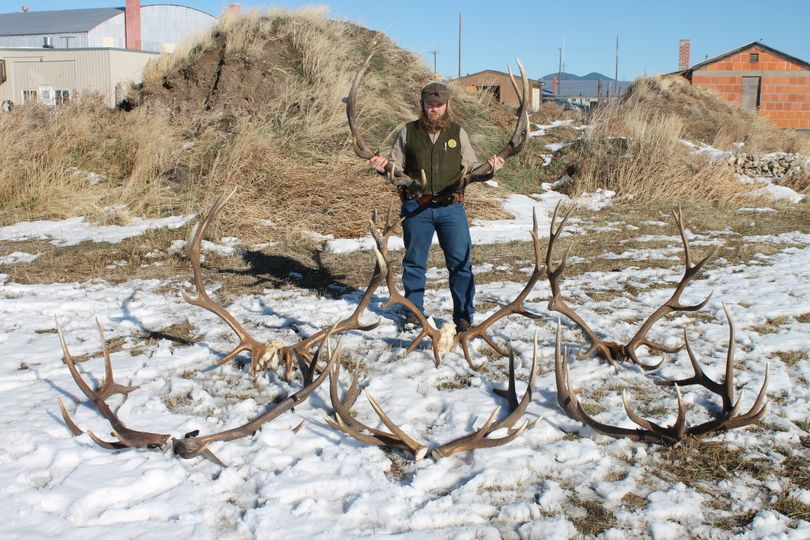 Montana Fish, Wildlife and Parks Warden Shawn Briggs poses with trophy elk racks confiscated from twin brothers charged with illegally killing eight bull elk in central Montana.  (Montana Fish, Wildlife and Parks)