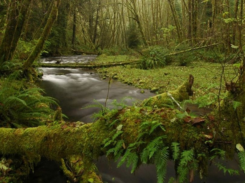 Rock Creek in the Cabinet Mountains Wilderness is vulnerable to proposed mining. (U.S. Forest Service)