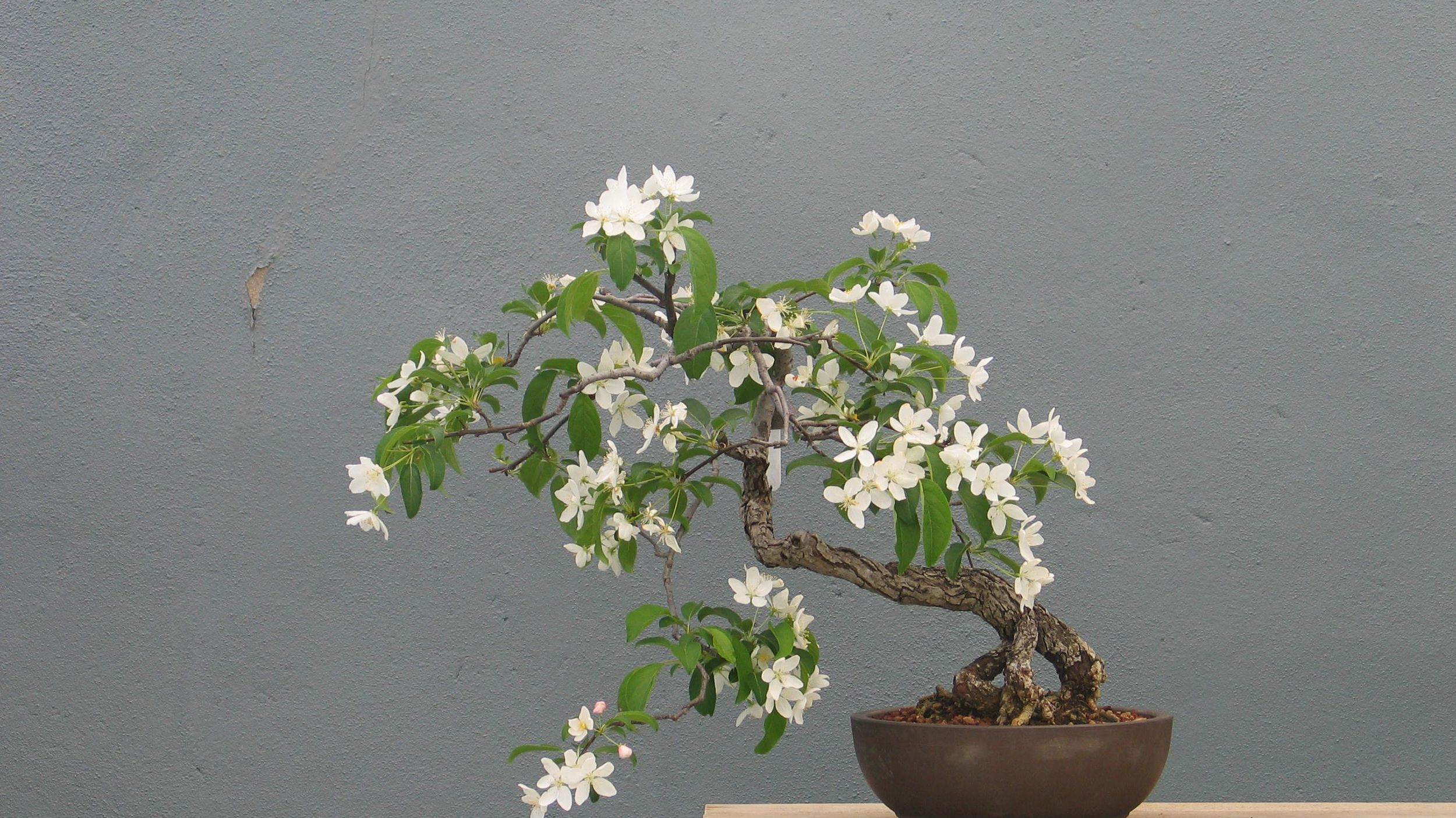 Resources Abound To Help Bonsai Beginners Succeed The Spokesman Review