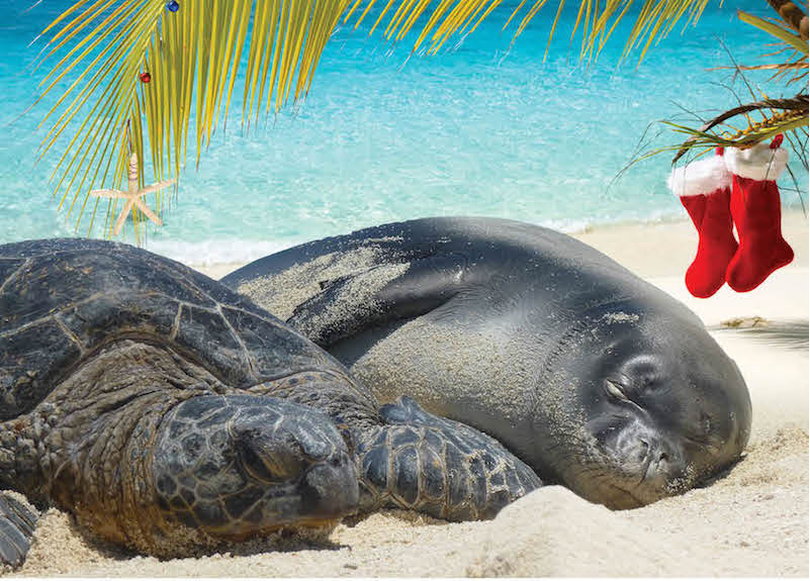 Sea turtle and monk seal in Hawaii, special critters worth saving. (National Wildlife Refuge Association)