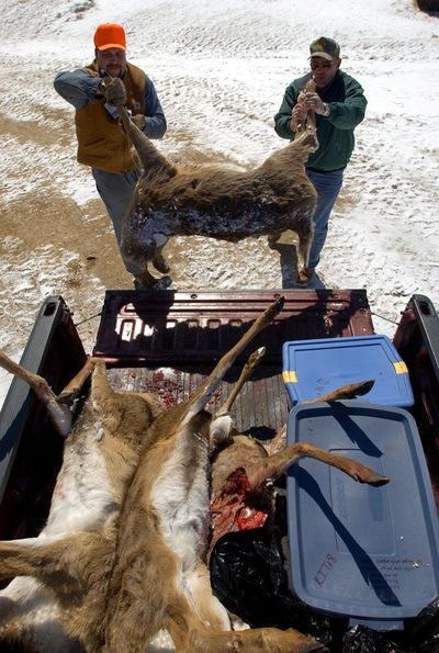 Montana Fish, Wildlife & Parks will be sampling deer and elk for bovine tuberculosis (TB) while conducting CWD surveillance during the coming general big game season, according to a news release. (ANDY MANIS / Associated Press)