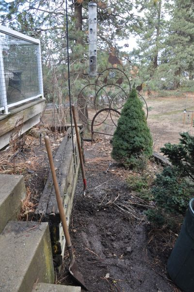 The salmonella bacteria affecting our local songbirds this winter is found in the pile of spent seed under bird feeders. The Washington Department of Fish and Wildlife says people can help control the spread of the disease by taking down the feeders until April 1, cleaning up the area underneath where the feeders hang and cleaning and disinfecting the feeders with a bleach solution before hanging them back up.  (Pat Munts/For The Spokesman-Review)
