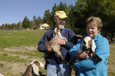 Rusty and Nancy Nelson, the heart and soul of  the Peace and Justice Action League of Spokane, stand Friday outside their home near Rockford with two new kids from the goat herd they share with a neighbor. The couple are retiring from their leadership role after almost 20 years at the nonprofit.  (Jesse Tinsley / The Spokesman-Review)