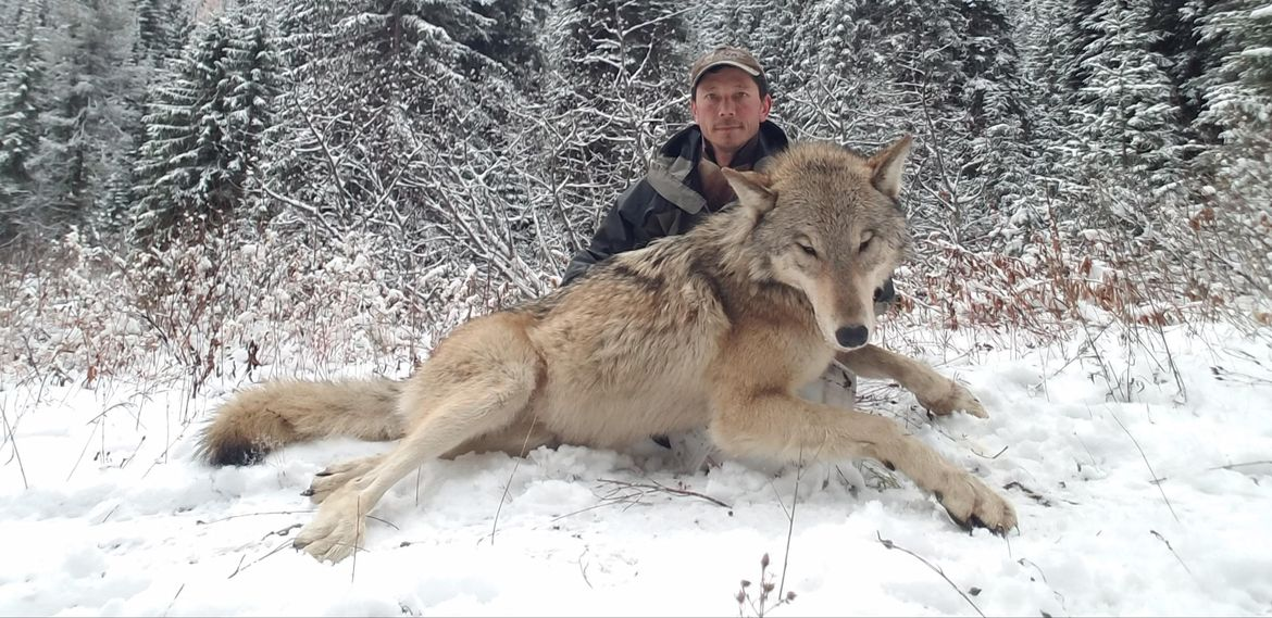 Should the State of Idaho finance a wolf bounty killing program?