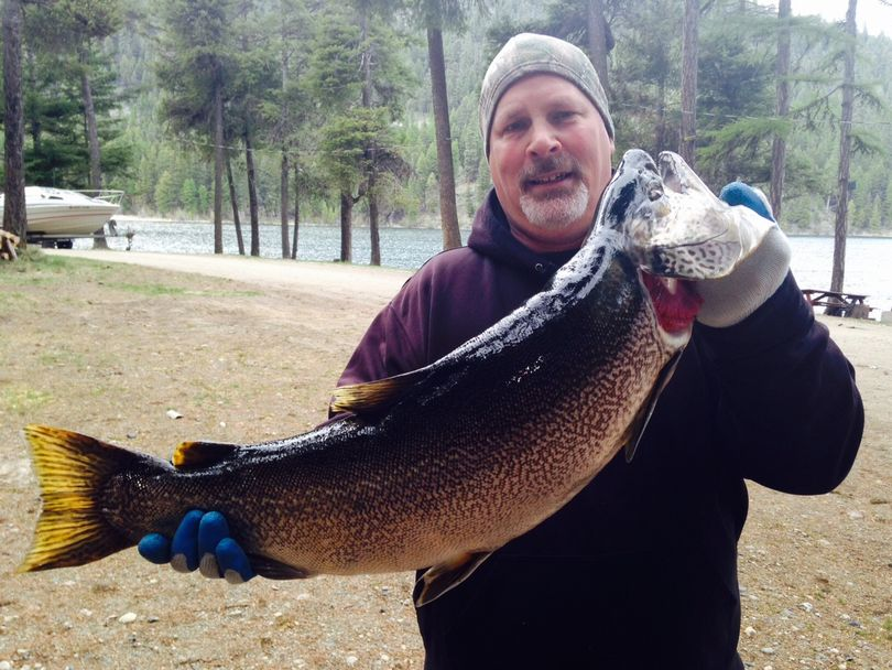 Kelly Flaherty, 53, of Priest River, Idaho, caught this 18.49-pounded Washington state record tiger trout on May 5, 2015, in Bonaparte Lake near Tonasket.  (Courtesy)