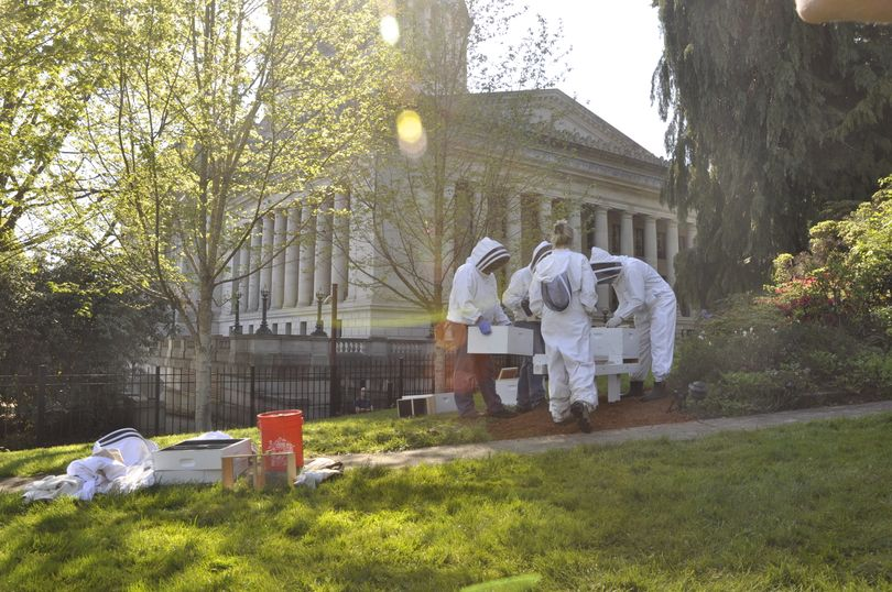 OLYMPIA Beekeepers Laurie Pyne, in front, and Duane McBride, Mark Emerich and Jeff Coleman, left to right, prepare hives for bees that were relocated Wednesday to the lawn of the governor's mansion. (Jim Camden/The Spokesman-Review)