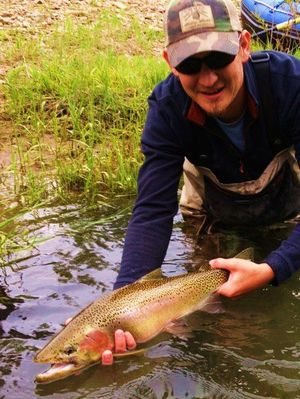Josh Seaton releases a huge cutthroat trout caught in a North Idaho river in the last week of May  2012. (Courtesy photo)