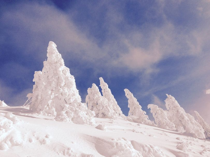 Snow blankets trees at the top of Bogus Basin on Sunday morning, against mostly blue skies (Betsy Z. Russell)