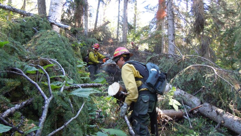 Forestry students from the Curlew Job Corps and other volunteers cleared an unbelievable tangle of blowdown trees to reopen 5.5 miles of the historic Big Lick Trail in the Kettle River Range in autumn 2012. (Kettle Range Conservation Group)