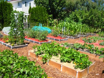 Raised beds are an ideal way to grow vegetables because they are easier to maintain than traditional vegetable gardens. Special to  (SUSAN MULVIHILL Special to / The Spokesman-Review)