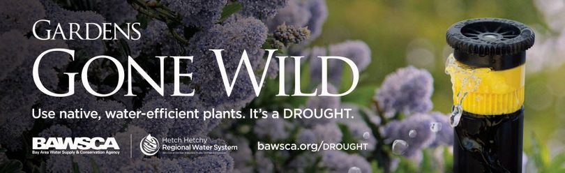 An advertising campaign inspired by drought encourages California residents to landscape with native plants that need less water.  The ads also encourage people to take shorter showers and use brooms to sweep instead of hosing off driveways and sidewalks. (San Francisco Public Utilities Commission)