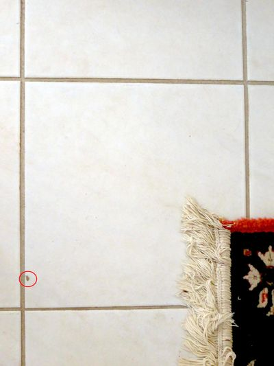 A small chip in this white tile can be seen in the area circled in red. It can be repaired in less than an hour. (Andrew Vous)