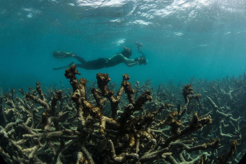 In this May 2016 photo released by The Ocean Agency/XL Catlin Seaview Survey, an underwater photographer documents an expanse of dead coral at Lizard Island on Australia's Great Barrier Reef. Coral reefs, unique underwater ecosystems that sustain a quarter of the world's marine species and half a billion people, are dying on an unprecedented scale. Scientists are racing to prevent a complete wipeout within decades. (Associated Press)