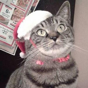 Thor the Christmas Cat