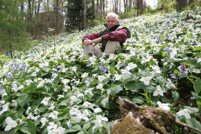Ron Brown sits among some of the colonies of trilliums growing in his hillside garden at Harrisonburg, Va. Trillums are a long-blooming wildflower that often take four- to seven years to mature from seed to first bloom.   (Associated Press / The Spokesman-Review)