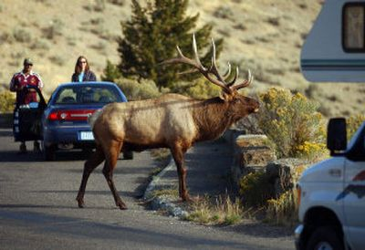 A bull elk stops traffic inside Yellowstone National Park. Entry fees to all national parks are being waived on Saturday and Sunday, Aug. 14-15.   (File/Associated Press / The Spokesman-Review)