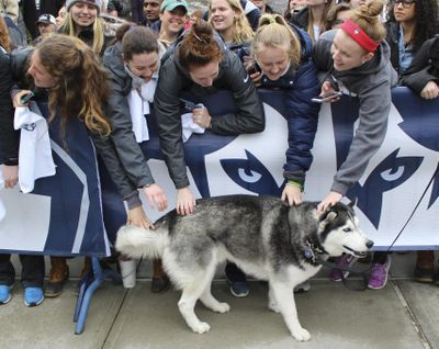 Fans pet University of Connecticut mascot Jonathan, the Husky, during a send-off rally for the Connecticut women's basketball team outside Gampel Pavilion in Storrs, Conn., Tuesday, March 28, 2017, as they prepare to board a bus to depart for the Final Four of the NCAA college basketball tournament in Dallas. (Pat Eaton-Robb / Associated Press)
