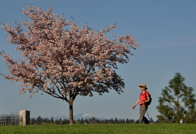 Meredith Heick strolls near the Fort George Wright Cemetery overlooking the Spokane River with a trees blossoming in the city while snow still covers Mount Spokane in the background. (Rich Landers)