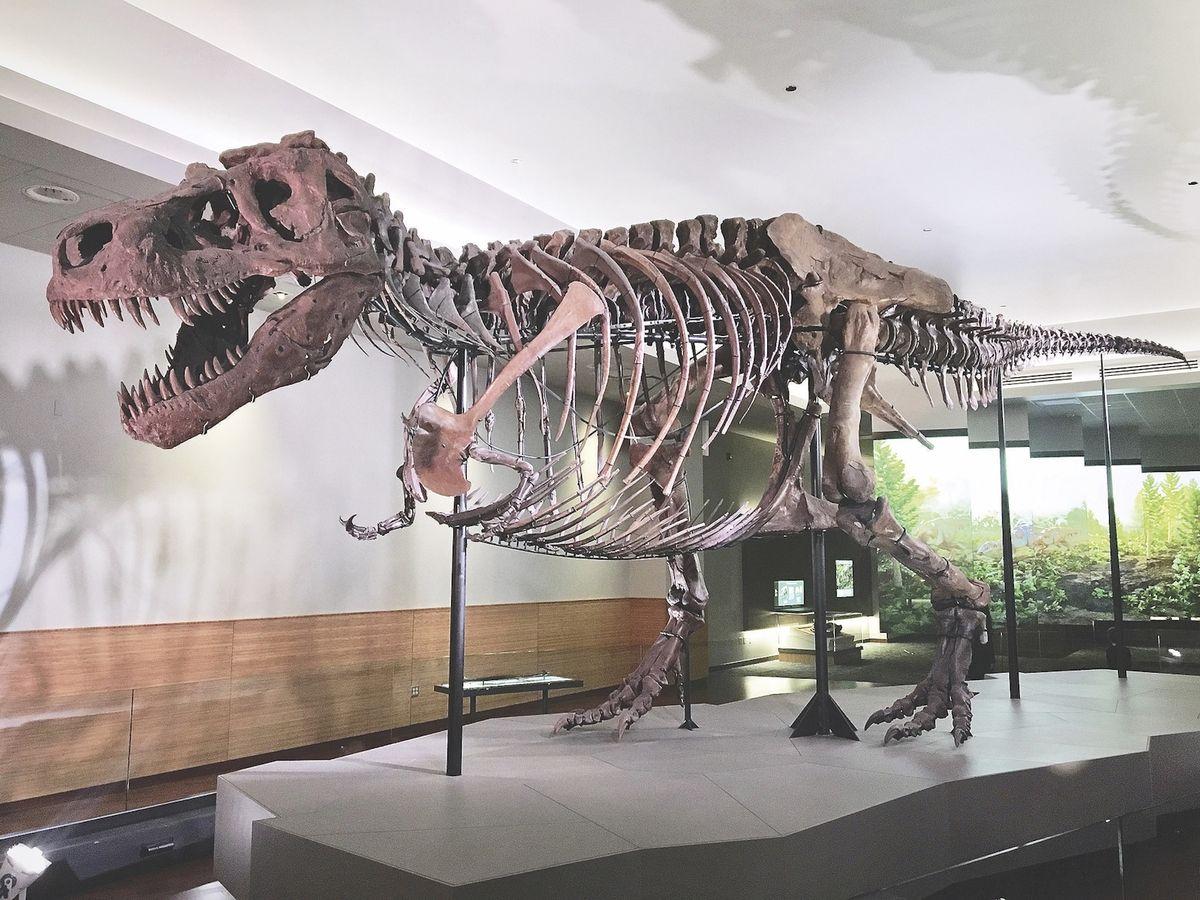 A T Rex Named Sue The Spokesman Review